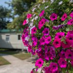 Trevarth Holiday Park in Cornwall Flowers